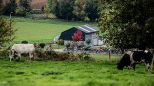 Ronde van Vlaanderen 2020. © Lars